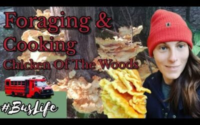 Foraging And Cooking Chicken Of The Woods Mushrooms | Bus Life – Jacies Journey
