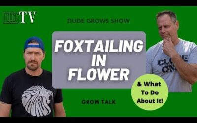 Foxtailing In Flower: What Causes It And What To Do About It