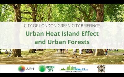 Urban Heat Island Effect and Urban Forests | Green City Briefing