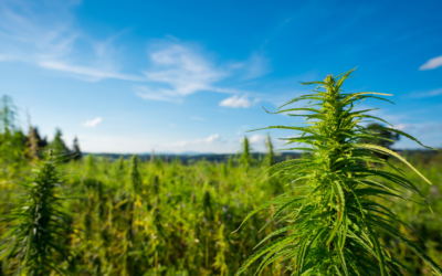 Update: Here's What AB 45 Means For the California Hemp Industry